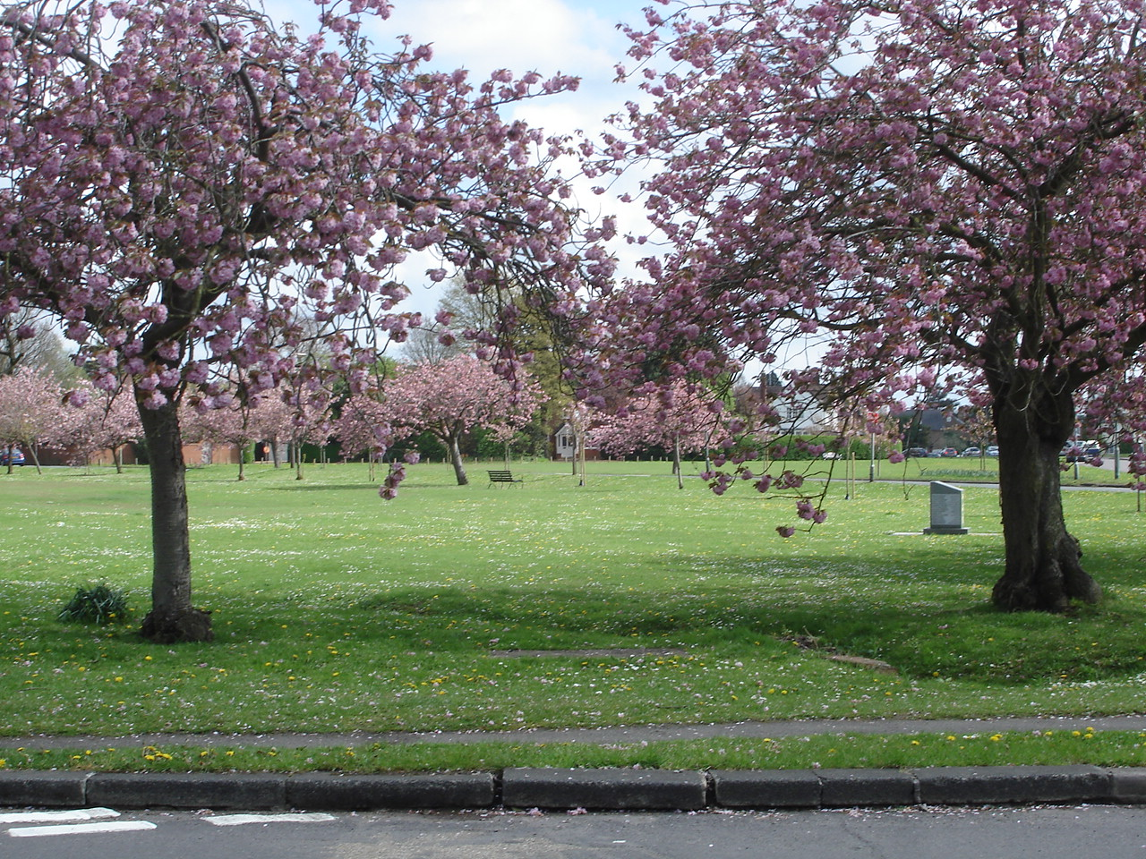 The Tilt Cherry Trees